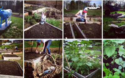 Inter-faith Food Shuttle Profiles Our 2014 Community Garden Season