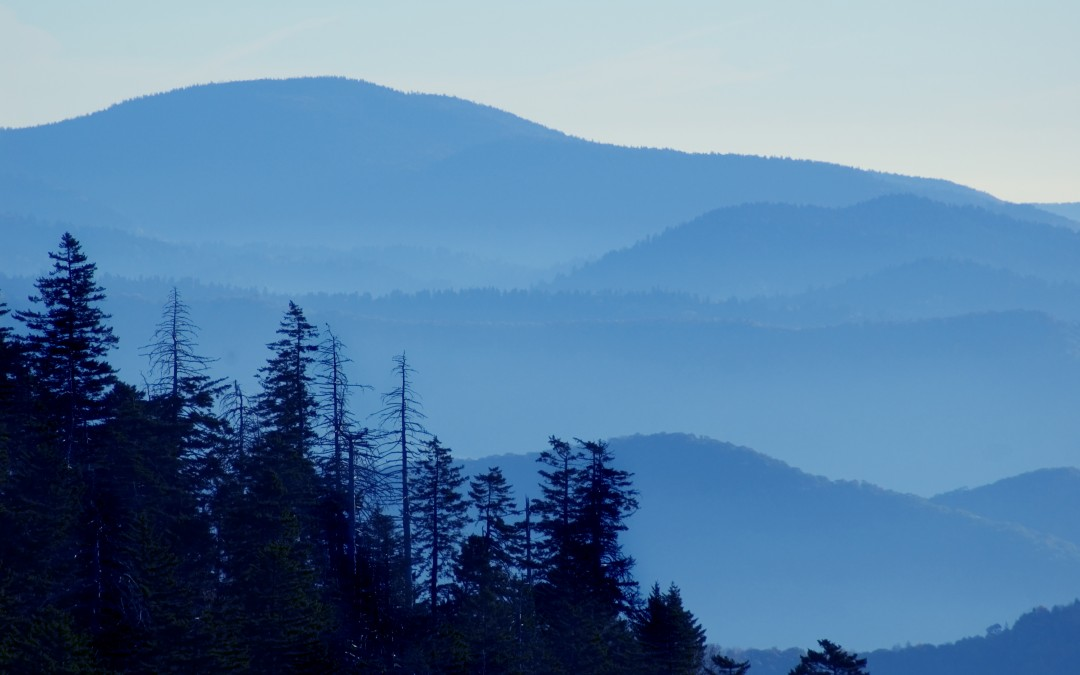 Hike Asheville: 5 Quick Escapes You Can Take Right Now