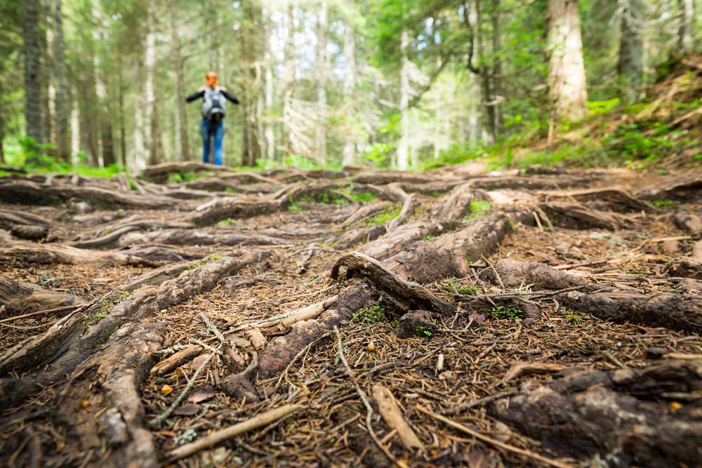 5 Medium North Carolina Hikes You Need to Experience This Year
