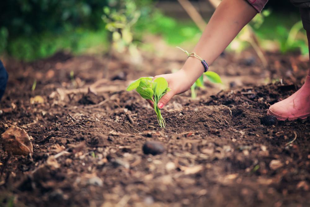 planting-garden