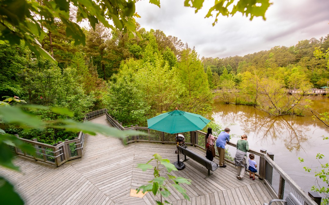 Step it Out: 6 Beautiful North Carolina Walking Trails You'll Love