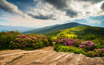5 Gorgeous North Carolina Hikes for Flower Lovers