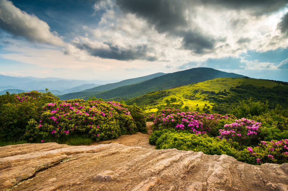 http://blog.bcbsnc.com/wp-content/uploads/2015/05/Roan-Mountain.jpg