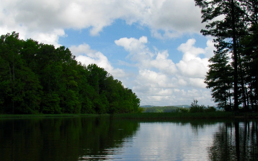 Jordan Lake, North Carolina: Where Eagles Dare