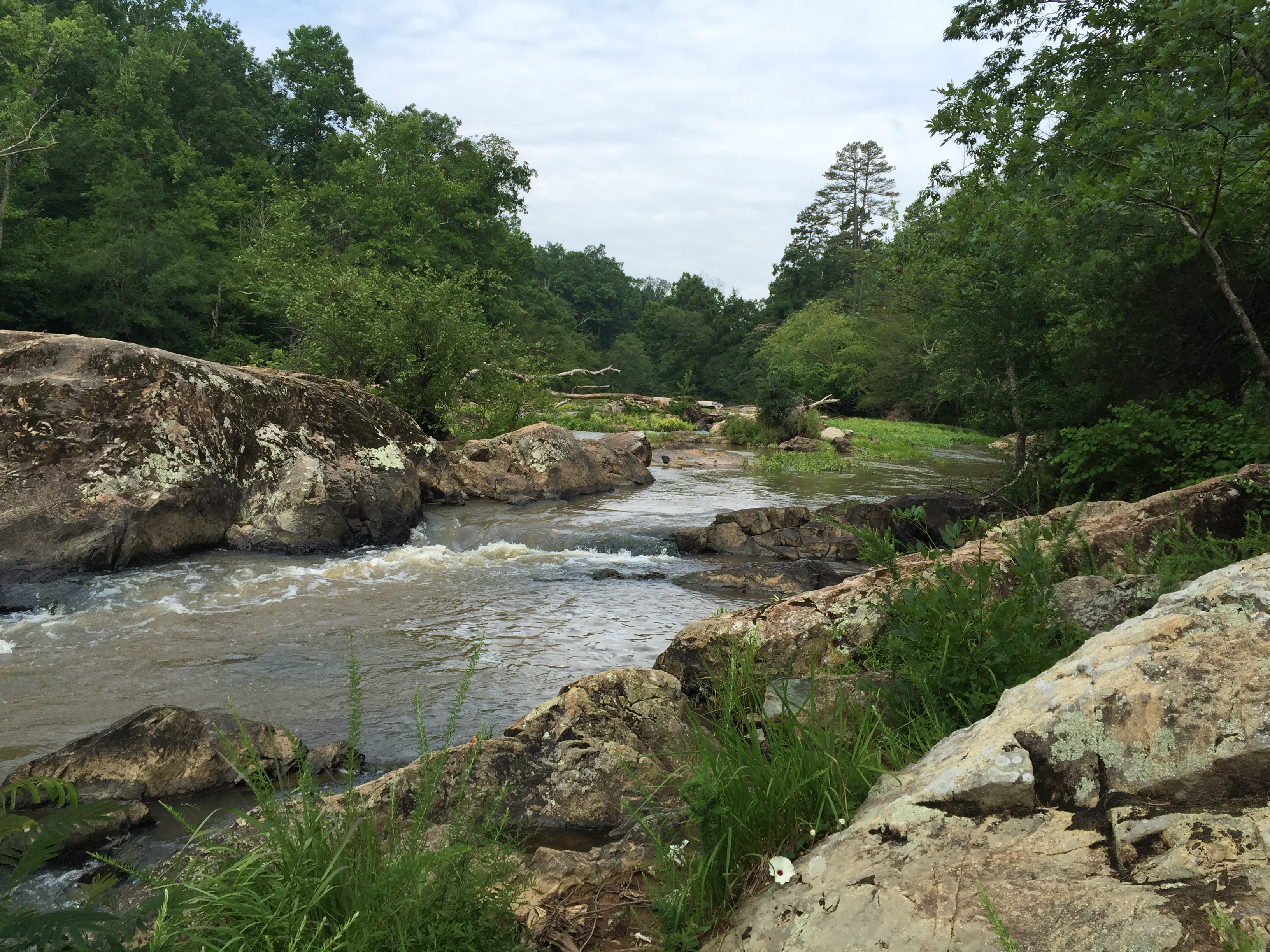 An Amazing World of Wonder Minutes from Downtown Durham