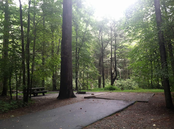 Davidson River Campground:  photo courtesy Cradle of Forestry Interpretive Association in America