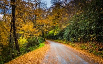 15 North Carolina Autumn Hikes Bursting with Breathtaking Foliage
