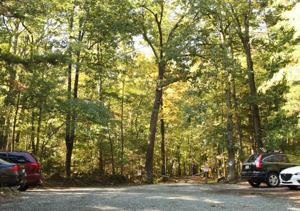 Duke Forest 1