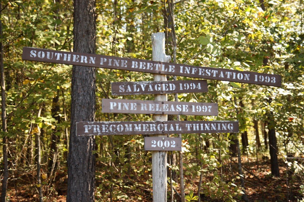 "About a mile into our walk, we came across a sign giving some history of the forest. ""Precommercial thinning"" means some trees were taken out so others would have more room to grow to full size."