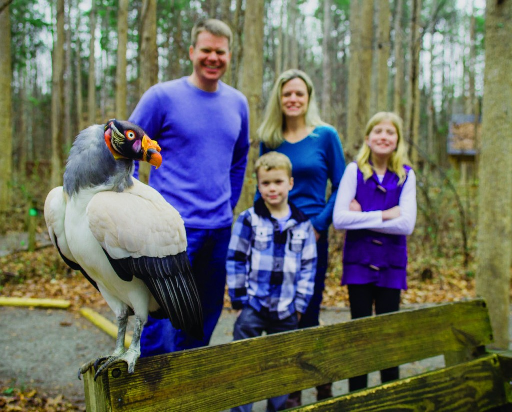 Photo credit: Carolina Raptor Center