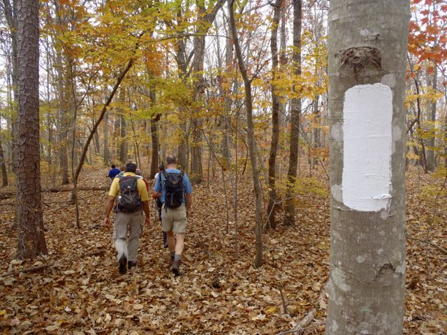 Technically, you don't find blazes in wilderness areas. But you do in the Birkhead Mountain Wilderness of the Uwharrie National Forest. A small transgression for an area that lives up to its wild image. Image: Joe Miller