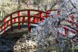 duke gardens spring flowers