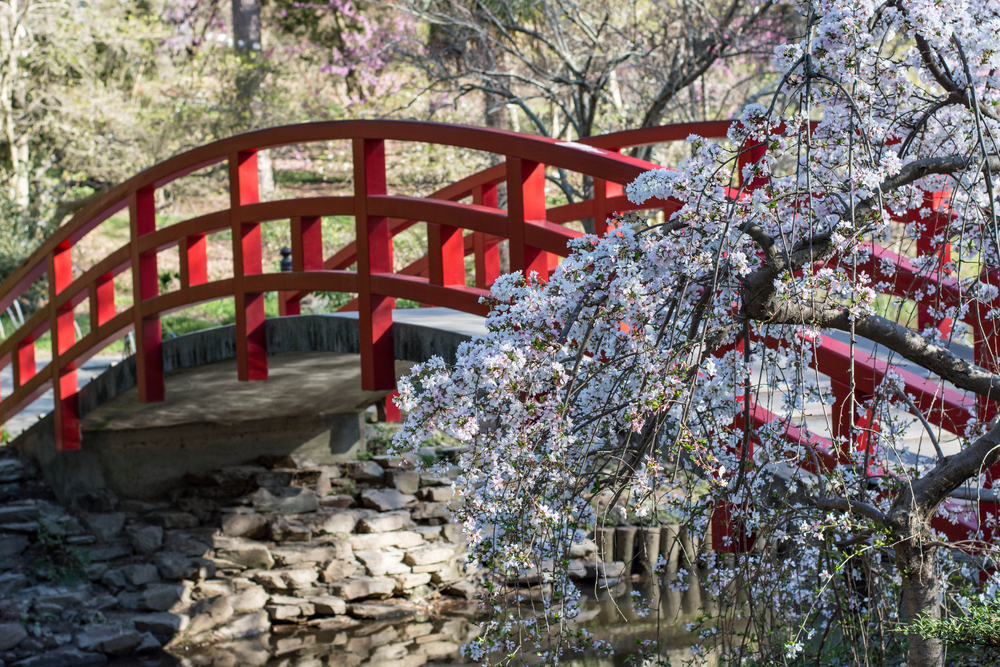 The Best Places to See Flowers in the Spring in NC