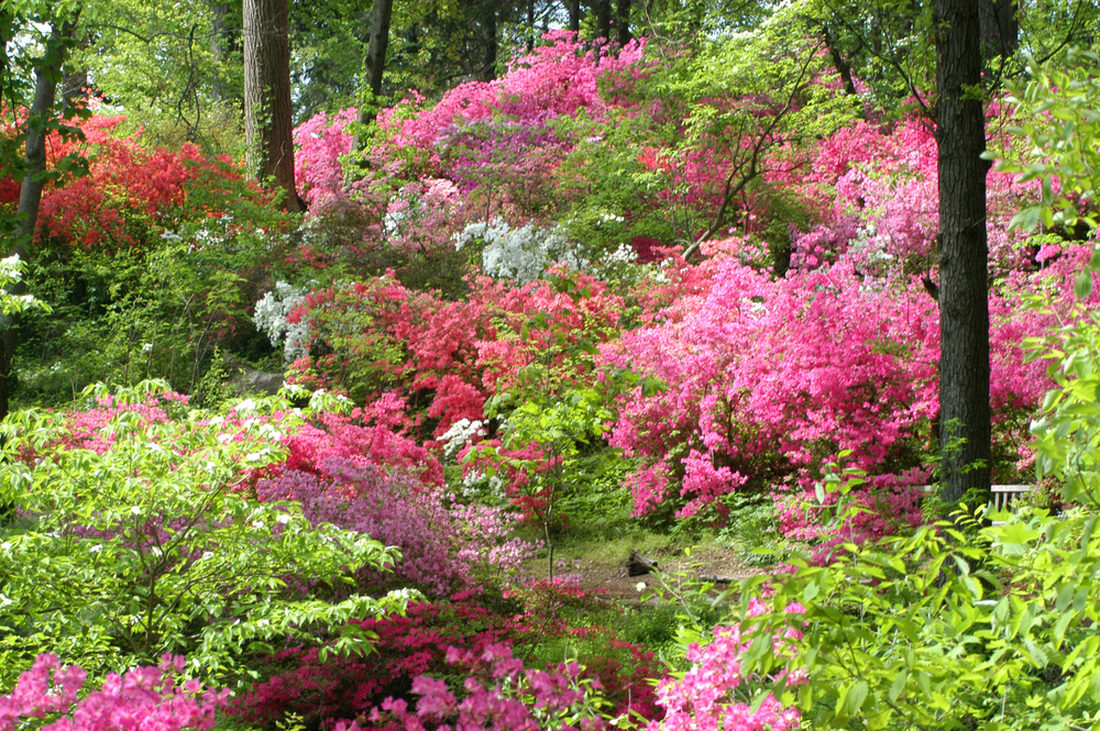 Plantations Near Charleston besides 28 Japanese Garden Design Ideas To Style Up Your Backyard also 26689530 together with Pollinator Garden Will Benefit Vital Bird Butterfly Bird Species together with Freshwater Fishing In Florida Visitflorida. on north carolina coastal gardens