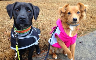Wag More: The Top 5 Health Benefits of Owning a Dog