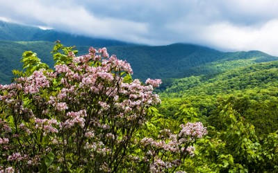 5 Can't Miss NC Mountain Hikes Full of Wildflowers