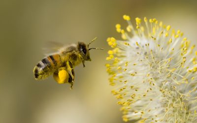 Let it Bee: A Durham Start-Up Works to Save Honey Bees…and Our Food System