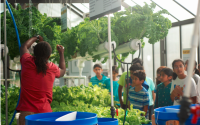 The Future of Farming in West Charlotte