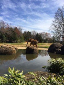 Photo: North Carolina Zoo/Michelle Rogers
