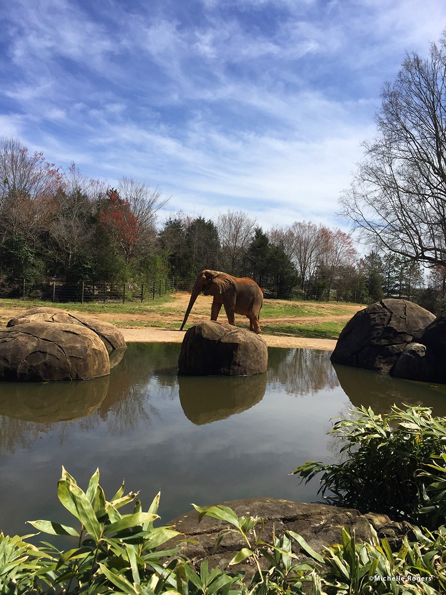 Photo: North Carolina Zoo/Michelle Rogers