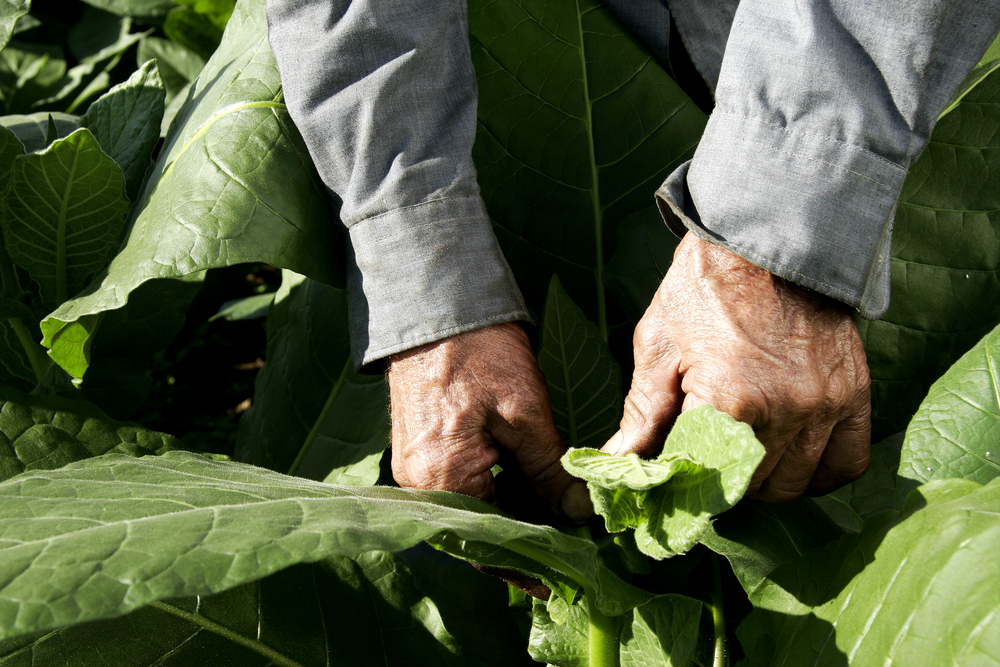 "My Life-Changing Perspective: What I Learned in the Tobacco Fields with ""Mean Ma-Ma"""