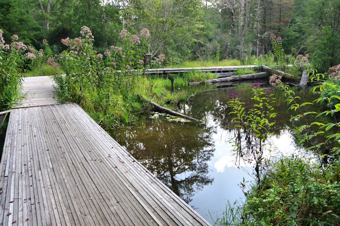Boardwalk over pond