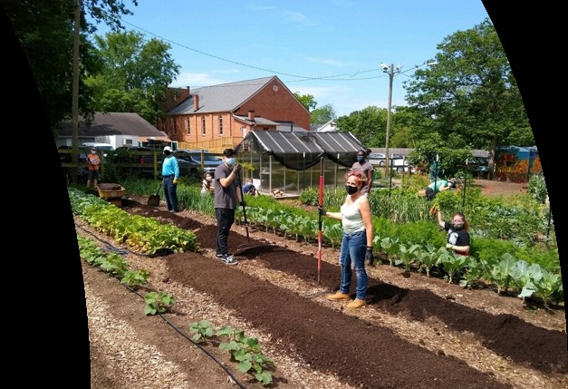 Masked volunteers stand out in the community farm with gardening tools