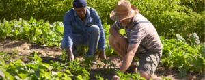 Two men work in community garden