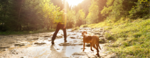 Man and his dog hike up a grassy incline